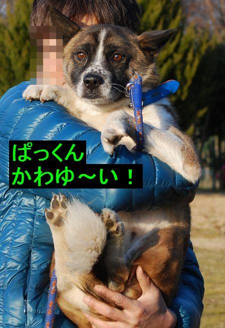 f0109202_22242363.jpg