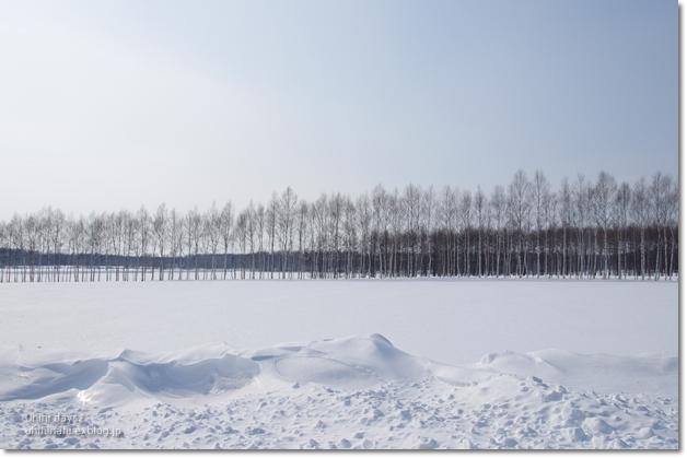 雪の中の cafee BuHo (カフェ ブーオ)_f0179404_2110678.jpg