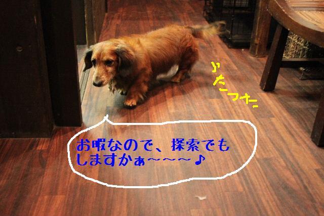 b0130018_18554041.jpg