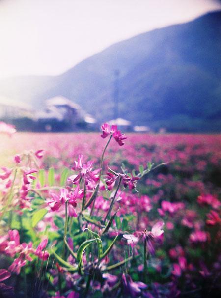 春が来た?_d0006718_16432679.jpg