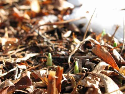 芽がでる_a0129867_17165255.jpg