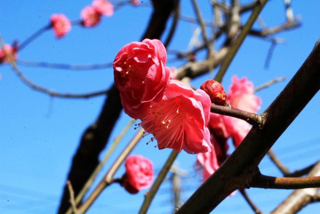 暖かな春日和_a0107574_19574632.jpg