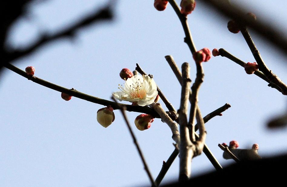 暖かな春日和_a0107574_19575580.jpg