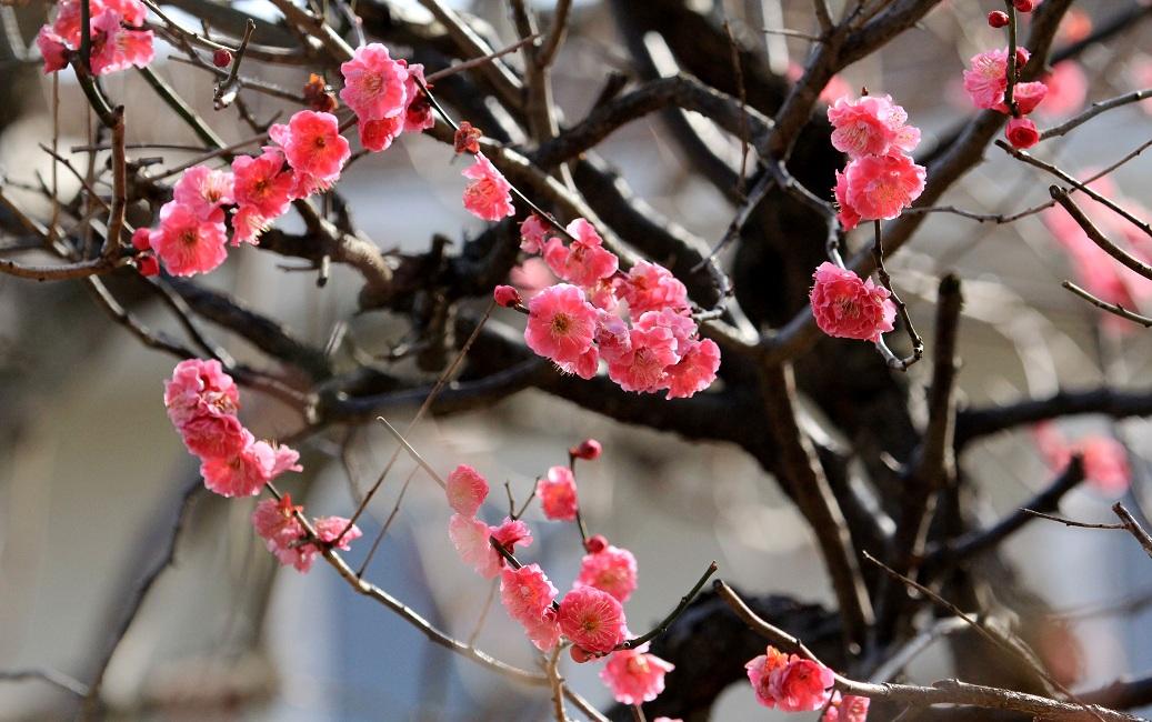 暖かな春日和_a0107574_19594532.jpg