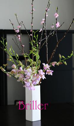 春うらら。_d0113182_20191159.jpg