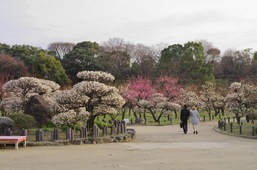 「梅香る、大阪城公園 梅林」_a0133692_19235519.jpg