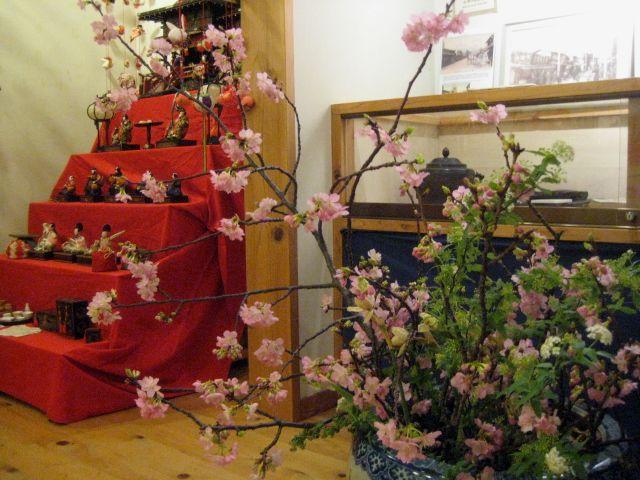 頂いた 沼川桜が見ごろになりました!!_b0093221_19195489.jpg