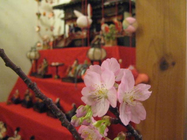 頂いた 沼川桜が見ごろになりました!!_b0093221_19215455.jpg