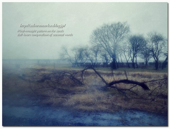 2012 冬の記憶 №10 ~冬雨 鬼怒川残景 倒木のある風景~_f0235723_1536546.jpg