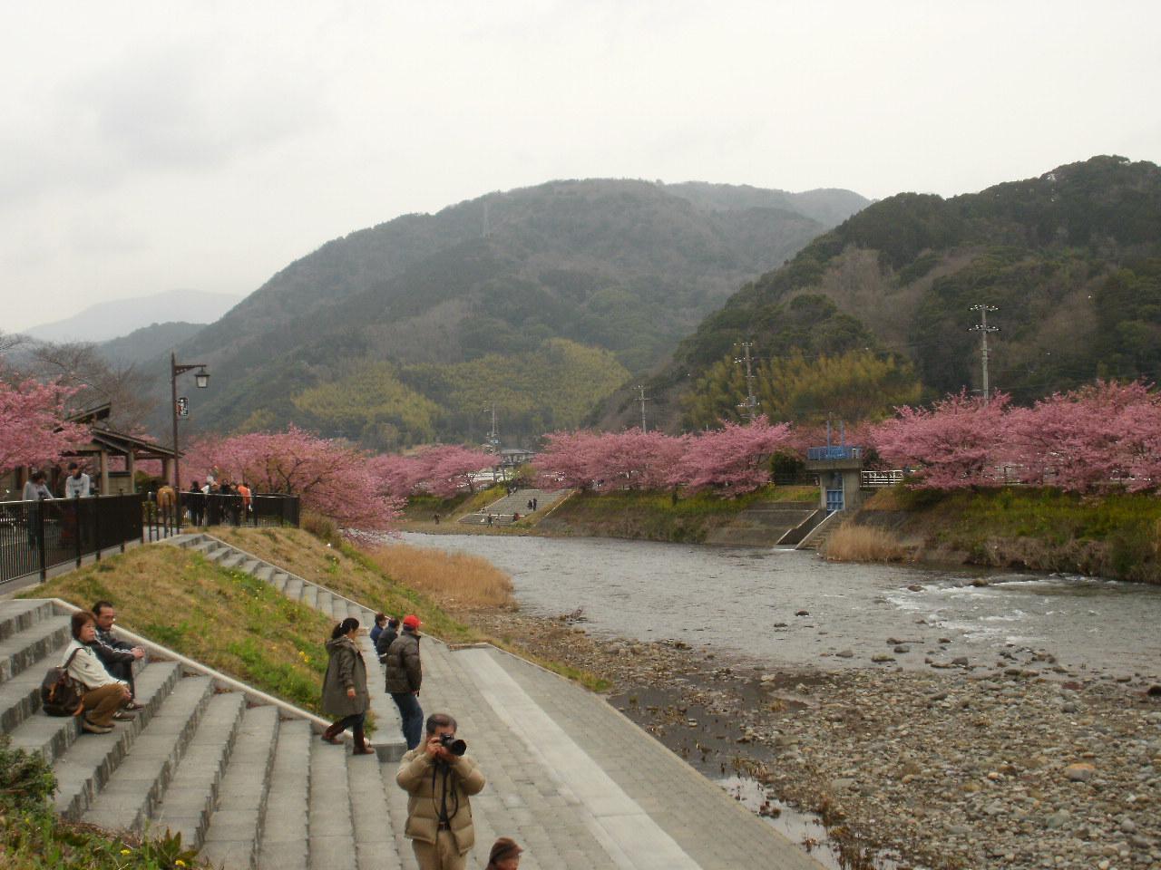 今日は母と一緒に河津桜を堪能しました♪_f0095325_23184159.jpg