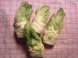 新種の野菜_f0130259_1594046.jpg
