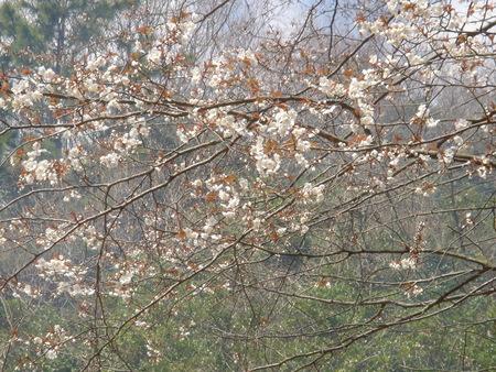H17年「お花見パーティー」_c0108460_1864018.jpg