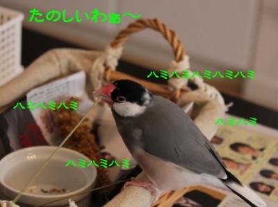 b0158061_21483652.jpg