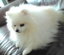 考える犬_e0169493_20271350.jpg