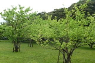 日本丸での、クルージング。(3)_f0166694_19305470.jpg