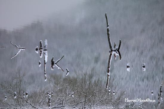 Half-Turn~冬景色_b0208495_224754100.jpg