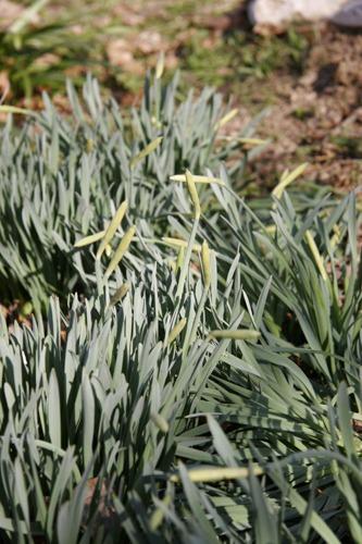 春の気配~3月の畑_f0106597_1245941.jpg