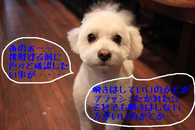 b0130018_16473747.jpg
