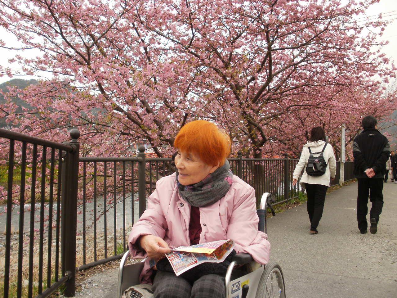 今日は母と一緒に河津桜を堪能しました♪_f0095325_1402491.jpg