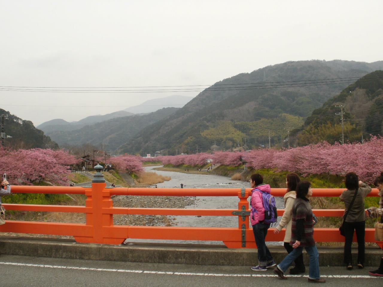 今日は母と一緒に河津桜を堪能しました♪_f0095325_1404987.jpg