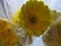 b0097631_19433836.jpg