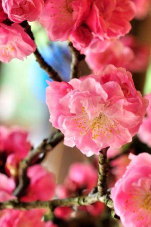 春の訪れ_b0151335_15503044.jpg
