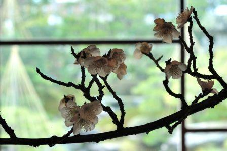 春の訪れ_b0151335_15543193.jpg