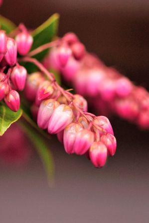 春の訪れ_b0151335_15564448.jpg
