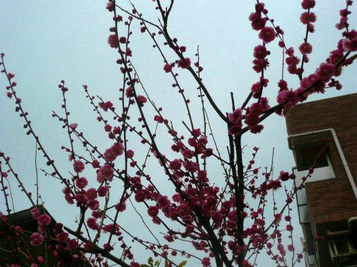 わが家に春が_c0087349_10343933.jpg