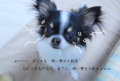 b0112758_199469.jpg