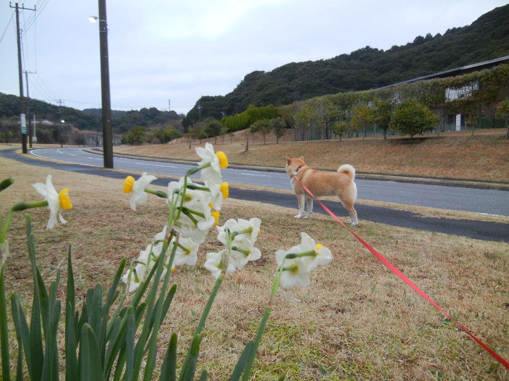 2012年3月8日(木)今日も水彩画描いたよ~!_f0060461_132180.jpg