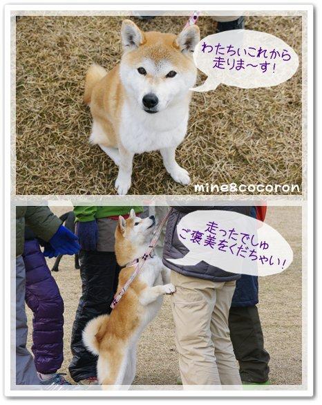 大阪ブロックアジリティー_a0053987_10431730.jpg