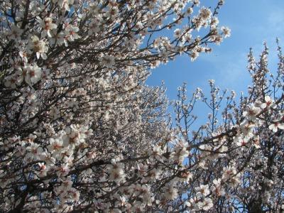 フバール島~春の風景~_b0106609_0551424.jpg
