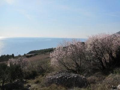 フバール島~春の風景~_b0106609_058475.jpg