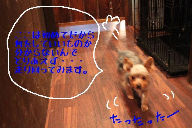 b0130018_1148740.jpg
