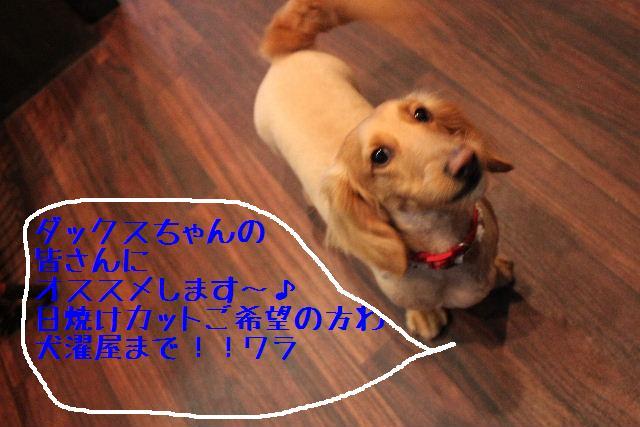 b0130018_18321591.jpg