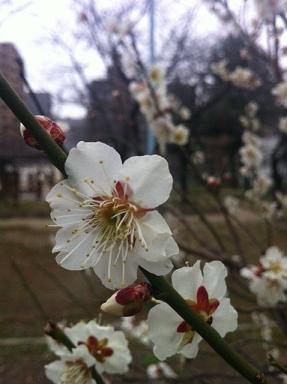 お花の教室終了^。^_c0187025_13415541.jpg