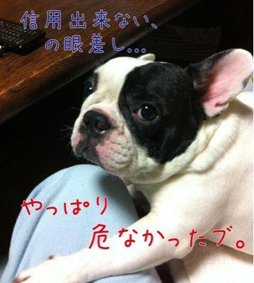 d0062132_20131365.jpg