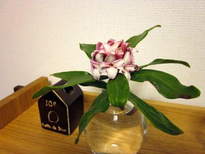 沈丁花が咲きました_c0038434_100564.jpg