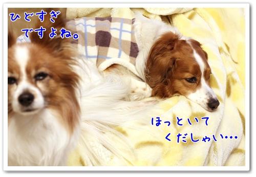 d0013149_15405963.jpg