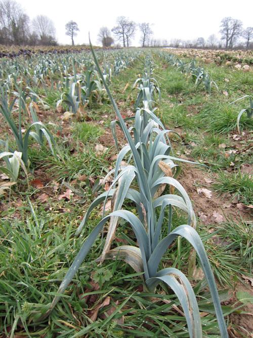 フランスの有機農家さん(フランス旅⑤)_d0231263_1116114.jpg