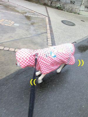 雨でもお散歩行きマシタ_e0222588_16585690.jpg
