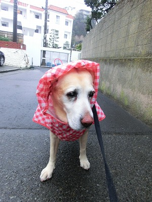 雨でもお散歩行きマシタ_e0222588_1703147.jpg