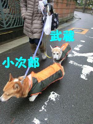 雨でもお散歩行きマシタ_e0222588_1715312.jpg