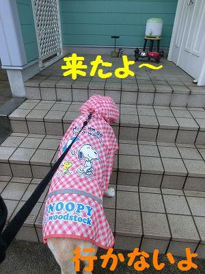 雨でもお散歩行きマシタ_e0222588_1734847.jpg
