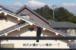 f0221708_20362388.jpg