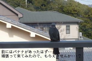 f0221708_2037938.jpg