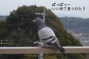 f0221708_21394080.jpg