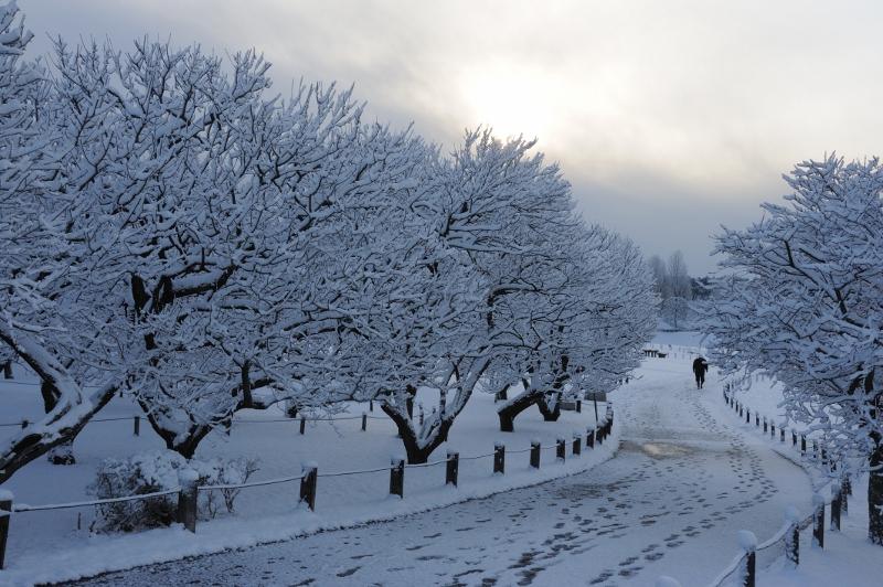 初雪ー1 _b0230131_1275819.jpg
