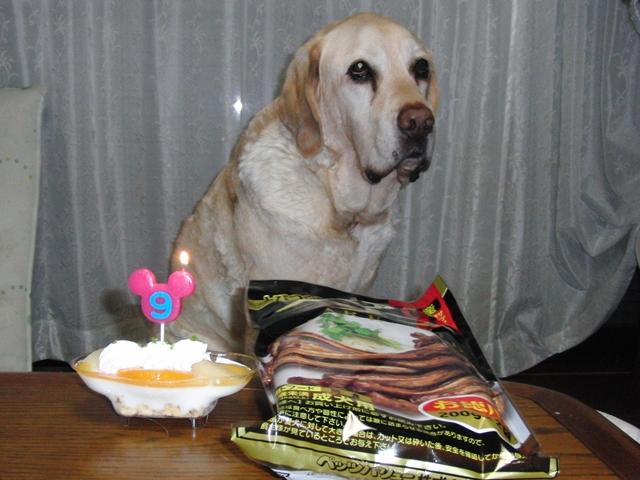 レックス9歳のお誕生日_f0032332_23344095.jpg
